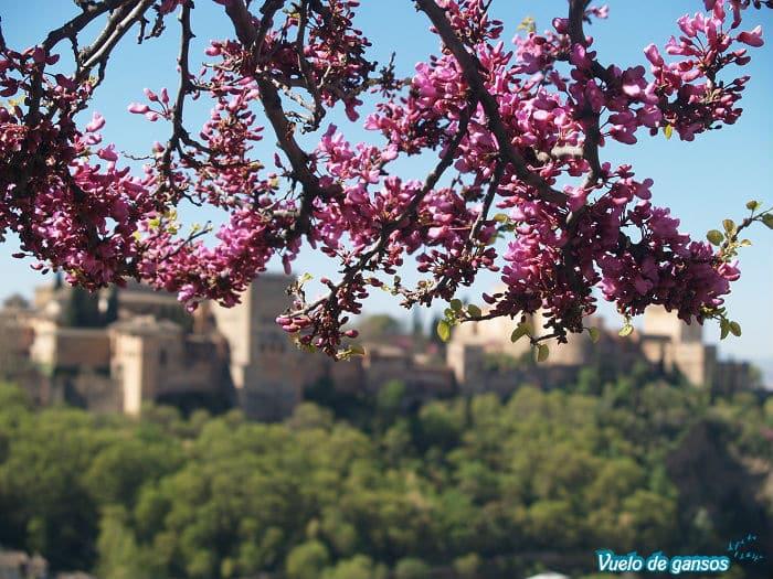 Vistas Alhambra