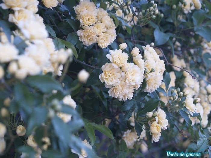 Flores en el Albaicín