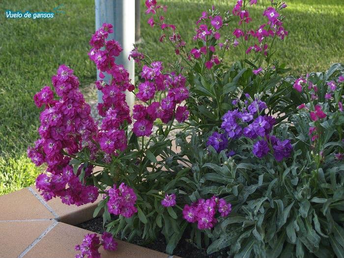 Flores violetas en Solius