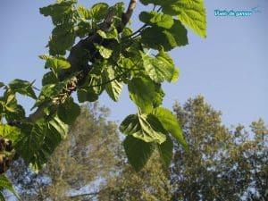 Hojas de un árbol en Solius